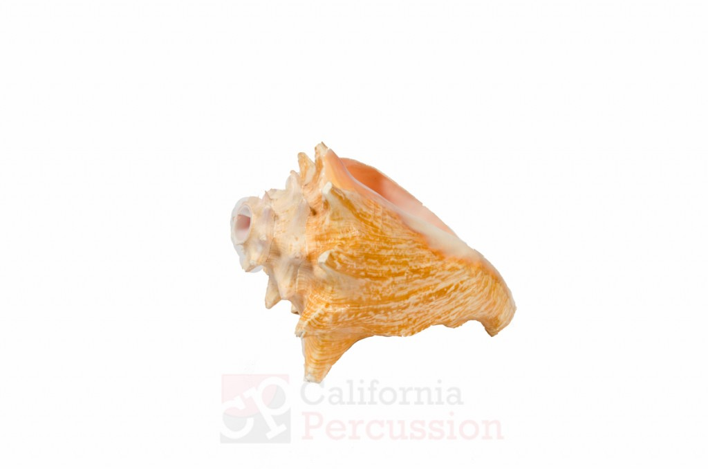 Conch Shell Rental
